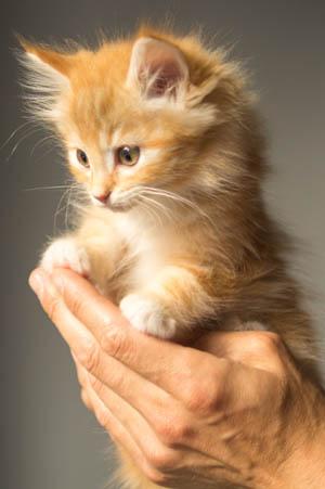 Cute Kitten in Hand